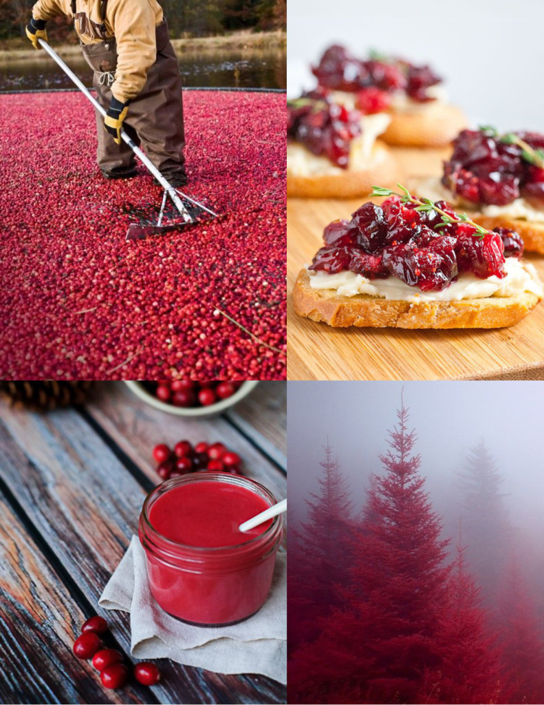 Cranberry_Moodboard